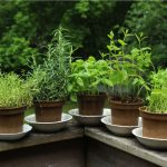 plantes-balcon copie
